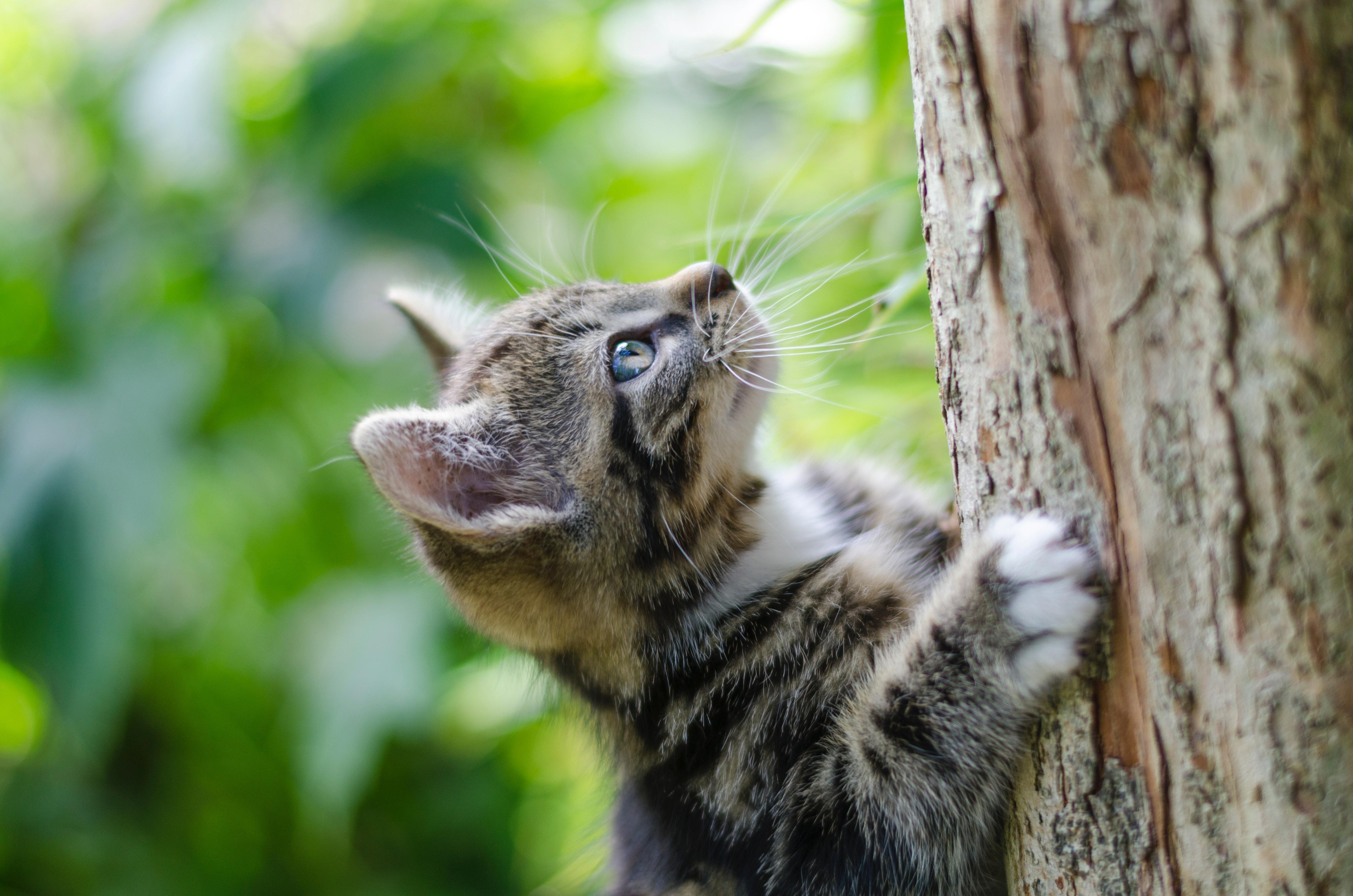 Perché I Gatti Amano Così Tanto Graffiare Cassiopei